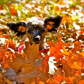 What!? by Tracy Marie - Animals - Dogs Portraits