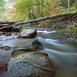 by Siniša Almaši - Nature Up Close Water ( water, up close, stream, forest, landscape, woods, .colors, depth, nature, tree, autumn, trees, view, stones, rocks, mist, river )