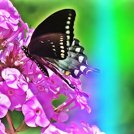 Swallowtail by Diane Merz - Digital Art Things