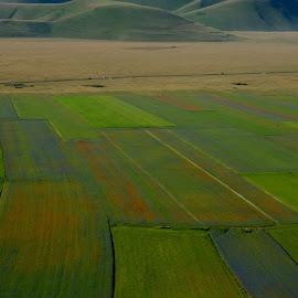 Castelluccio 24 by Bruno Brunetti - Landscapes Prairies, Meadows & Fields ( nature, colors, flowers, castelluccio, fields,  )