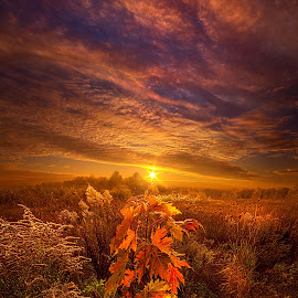 In Perfect Solitude There Is Grace by Phil Koch - Landscapes Sunsets & Sunrises ( canon, wisconsin, arts, joy, sun, love, autumn, shadow, dramatic, flowers, light, trending, colors, camera, beautiful, rural, shadows, field, sunburst, fineart, season, unity, fall, popular, peace, outdoor, meadow, trees, sunrise, hope,  )