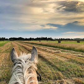 View from horse by Ivana Tilosanec - Instagram & Mobile iPhone ( horse, landscape photography, view, field, nature, animal, nature photography, landscape )