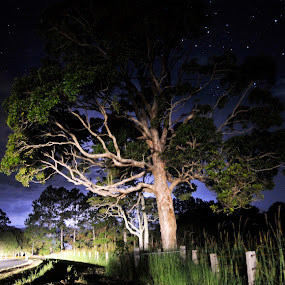 Main Arm Night  by Graham Nixon - Landscapes Starscapes ( w, australia., s, nature, stars, n, trees, night, storm, landscape )
