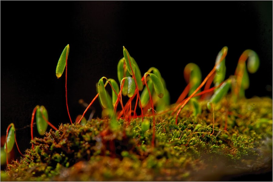 Moss Lanterns by Savio Joanes - Nature Up Close Other plants