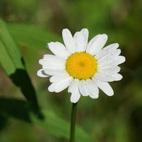 by Kathy Kehl - Flowers Flowers in the Wild