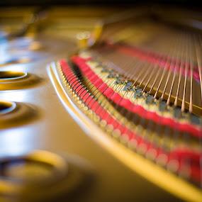 Inside a Steinway by Matt Cooper - Artistic Objects Musical Instruments