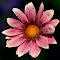 IMG_9182.jpg