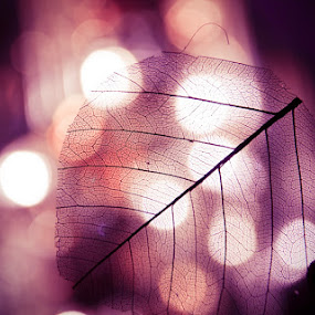 l!chts by Cornelis Weisshaar - Abstract Fine Art ( lights, leaf, light, city )