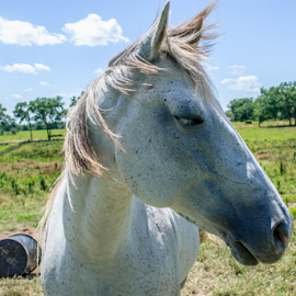 This is my good side. by Jamie Hodge - Animals Horses ( farm animals, nature, horses, horse, landscape,  )