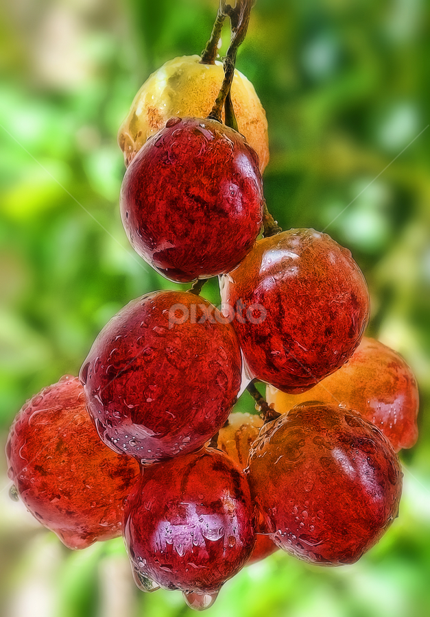 Grapes by Angelito Cortez - Nature Up Close Gardens & Produce ( grapes, pwcvegetablegarden, fruits, vitis vinifera, grape vine )