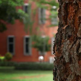 i am old by Tedjo Baskoro - Nature Up Close Trees & Bushes