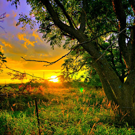 Take a Pause by Derrill Grabenstein - Landscapes Sunsets & Sunrises ( country morning, fence, grass, trees, sunrise, morning, landscape, country )