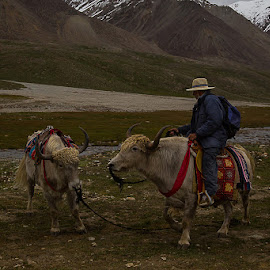 by Basharat Ali - People Street & Candids ( mountains, traveling, nature, travel )