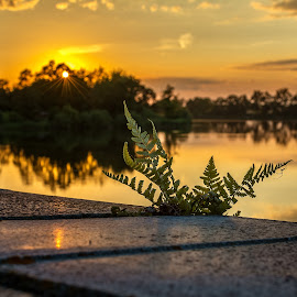 Fern by Jan Liška - Uncategorized All Uncategorized ( fern, janliska.eu, south bohemia, sky, sunset, fotografjiznicechy, stone, lake, bridge, sun )