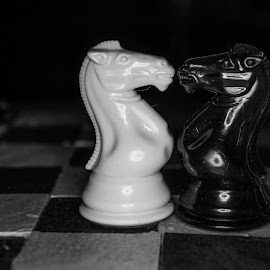 Knight by Darrin Ralph - Artistic Objects Toys ( games, black and white, toys, chess, knight )