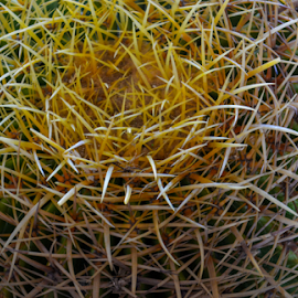 by Jeanne Knoch - Nature Up Close Other plants (  )