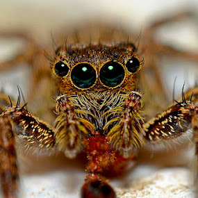 spider by Eko Janu - Animals Insects & Spiders