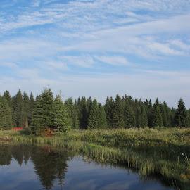 Krušné hory by Jarka Hk - Landscapes Waterscapes ( mirrors, waterscape, trees, landscape, photography )