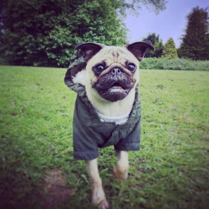 Pug walker Maidstone | dog walker Mote park | Pet sitting Kent