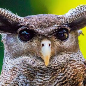Im Watching You by Ken Nicol - Animals Birds (  )