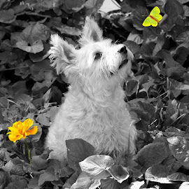 Scrappy by Wendy Bernhardt - Animals - Dogs Portraits ( #angels #wendybphotos #iluvmydogs #portraits #pooches )