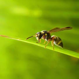 Alone Bee by Rama Smookerr - Instagram & Mobile Other ( macrodaily, insects & spiders, macro nusantara, macro, macro photography, macro nature,  )
