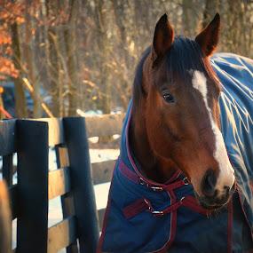 Jack by Sam Reed - Animals Horses (  )