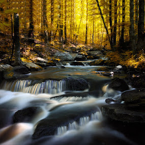 Ct Fall Stream by Ravi Nori - Landscapes Waterscapes