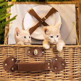 naughty kittens by Brook Kornegay - Animals - Cats Kittens (  )
