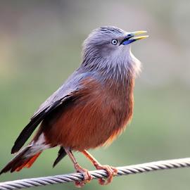 Ahoy! its morning by Mrinmoy Ghosh - Animals Birds (  )