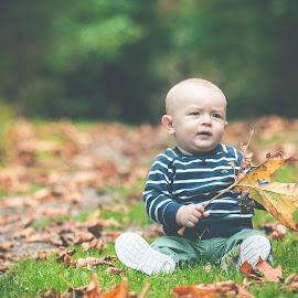 Leaf baby by Jenny Hammer - Babies & Children Babies ( fall, leaf, baby, cute, boy )