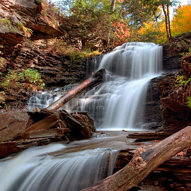 Shawnee Falls Under Warm Fall Colors by Gene Walls - Landscapes Forests ( water, fallen trees, stream, logs, waterfall, ricketts glen, wilderness, nature, autumn, state park, creek, fall, falls, whitewater, ricketts glen state park )