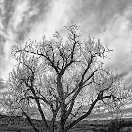 Old tree in the medow by Bruce Newman - Landscapes Prairies, Meadows & Fields
