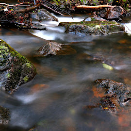 Water in forest by Gil Reis - Nature Up Close Water ( water, life, nature, forest, places, river )