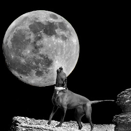 Howl at the moon by Nigel Street - Digital Art Places ( moon, night, dog )