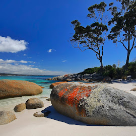 Bay Of Fires by Geoffrey Wols - Landscapes Beaches ( clear, water, sand, bay of fires, tasmania, trees, beach, rocks )