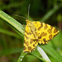 The speckled yellow