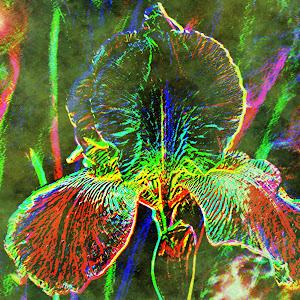 neon iris 2.jpg