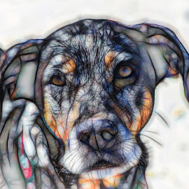 Catahoula by Dave Lipchen - Digital Art Animals ( catahoula )