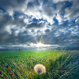 Good Day Sunshine by Phil Koch - Landscapes Prairies, Meadows & Fields ( vertical, travel, yellow, love, sky, nature, weather, light, colors, twilight, art, mood, journey, horizon, portrait, country, dawn, environment, season, serene, outdoors, lines, natural, hope, inspirational, wisconsin, ray, joy, landscape, sun, photography, life, emotions, dramatic, horizons, inspired, clouds, office, heaven, beautiful, scenic, living, morning, field, unity, blue, sunset, peace, meadow, summer, beam, sunrise, earth )