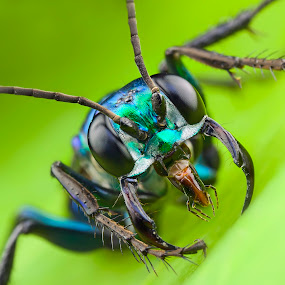 Angry Wasp by Tan Tc - Animals Insects & Spiders ( wasp, nature, macro photography, insects, close up )