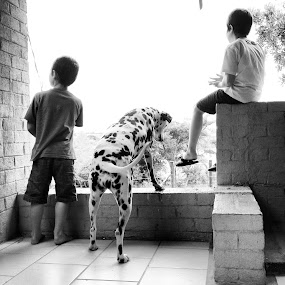 Dalmation dog with kids by Bradley Francis - Instagram & Mobile iPhone ( looking, black and white, dalmation, kids, dog )