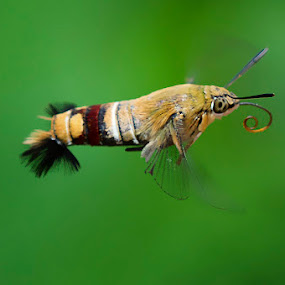by Fery Wahyudi - Animals Insects & Spiders