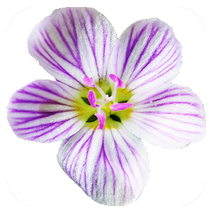 Flora of Virginia For PC / Windows 7/8/10 / Mac – Free Download