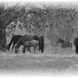 by Trudy Mader - Animals Horses (  )