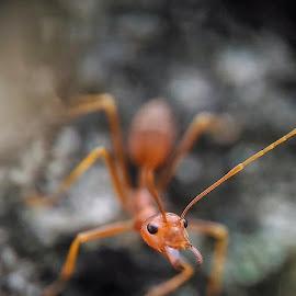 Injit injit semut by Alif  Fotografi - Animals Other