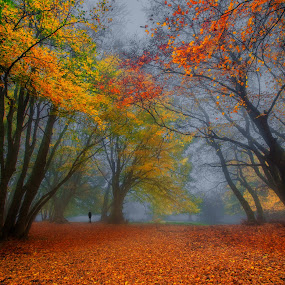 Autumn in Canfaito by Emanuele Zallocco - Landscapes Forests