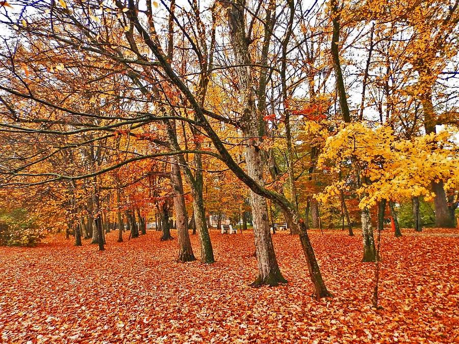 by Bojan Rekic - City,  Street & Park  City Parks