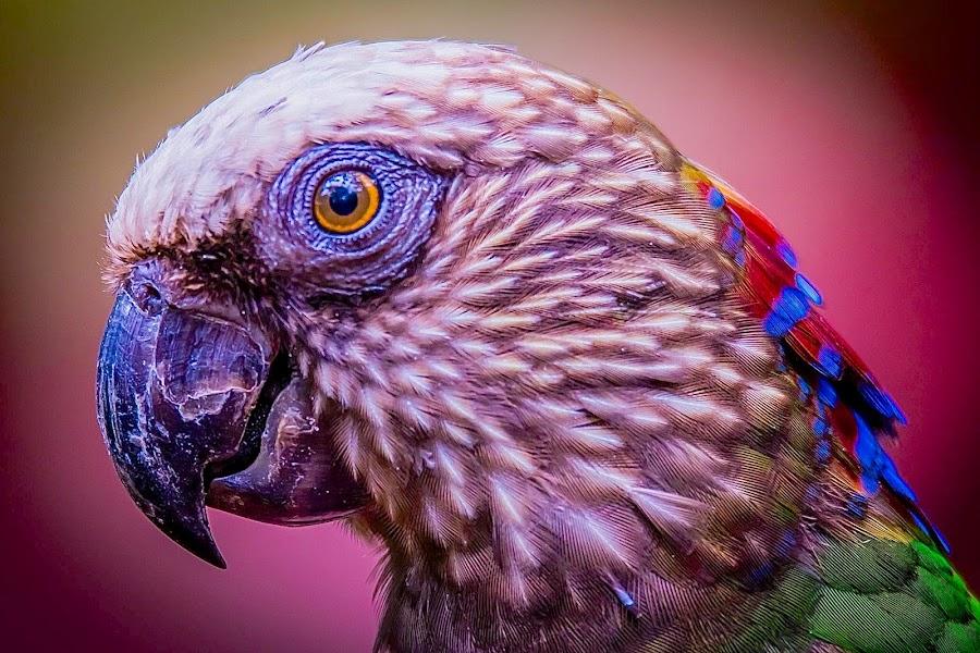 Im Pretty by Ken Nicol - Animals Birds (  )