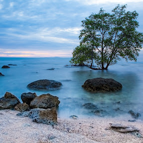 Isolation by Pudjiyanto Oentoro - Landscapes Beaches ( canon, tree, indonesia, sunset, rock, beach, landscape )
